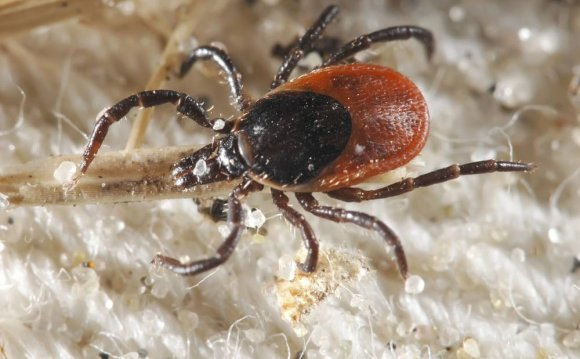 Lyme disease surges north: